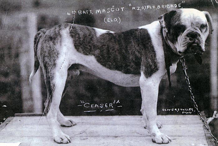 caesar-anzac-dog-WW1-487-700x467